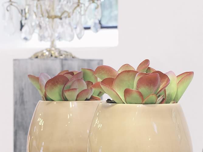 Blumen Odenthal Raum und Bürobegrünung